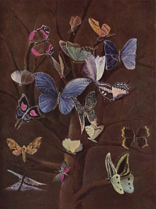 A variety of butterflies on a dark background.